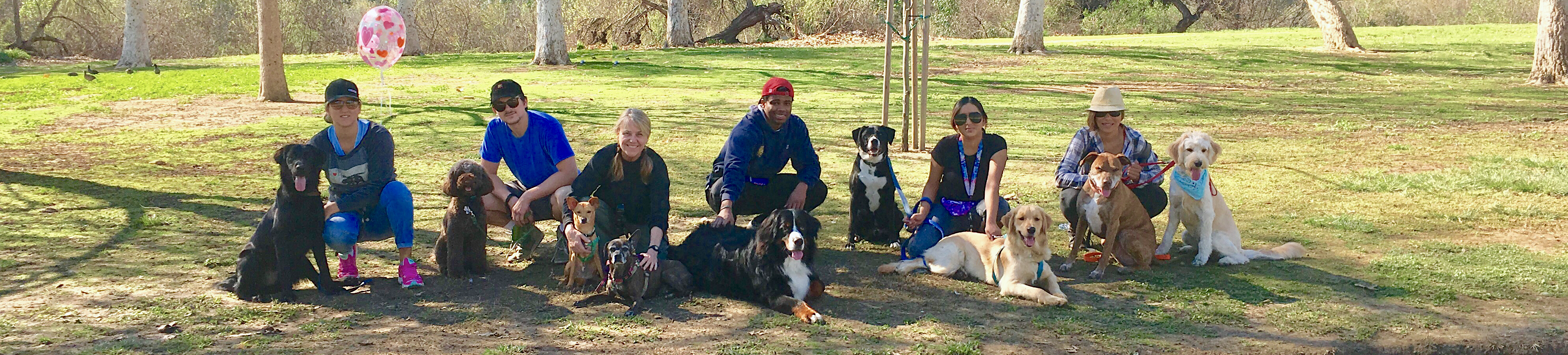 pack hikes, dog hikes, hiking with dogs, balboa park, dog hikers
