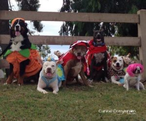 We've had some success for our 2015 Howl-o-ween hike, but the hoods don't fit!
