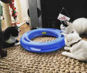 cats, cat toys, cats playing, happy cats