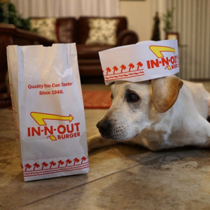 fast food dog, dog menu, in n out menu, secret dog menu