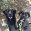 Abby's dogs Tucker and Sasha