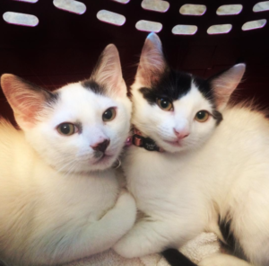 Pet of the Month, Cat of the Month, Kittens, foster kittens